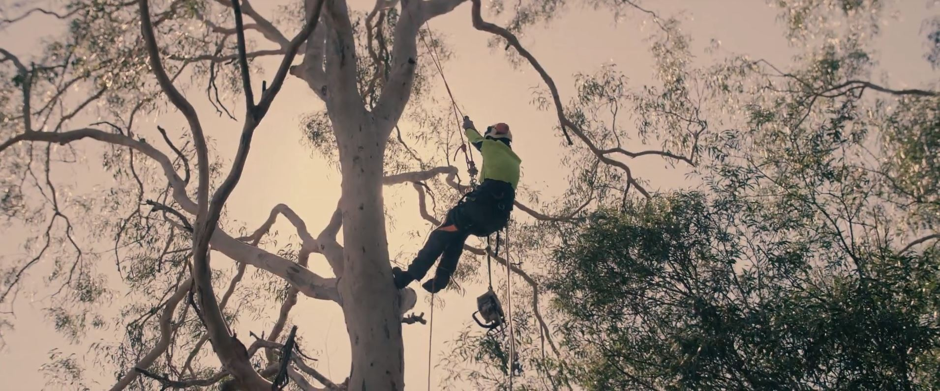 Why Tree Trimming is Needed For Every Tree