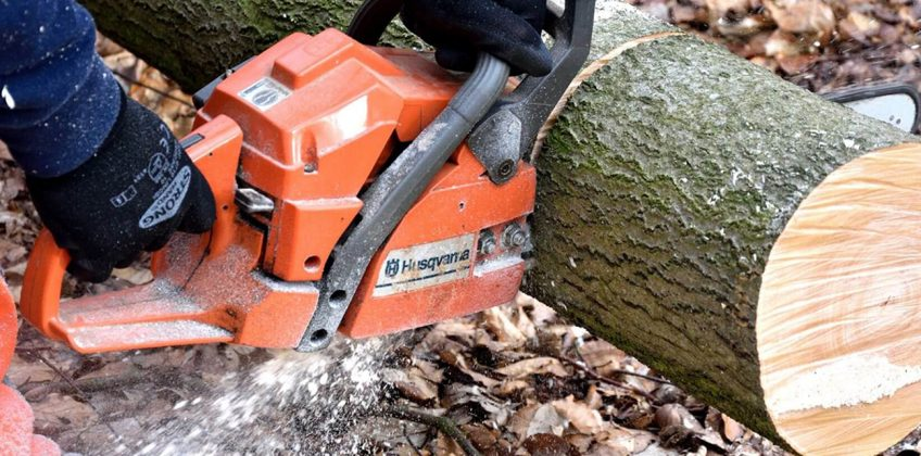 Reasons You Should Hire a Tree Care Service