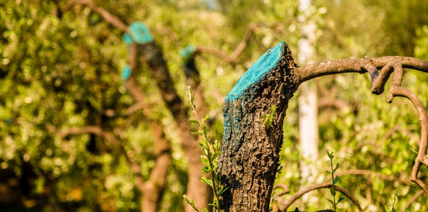 Signs That You Need an Arborist to Help You